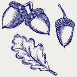 Acorn. Doodle style. Vector sketch Royalty Free Stock Images