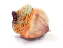 Acorn ilustracja wektor