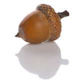 Acorn. Isolated on white with shadow Stock Images