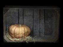 Acorn aka winter squash, pumpkin in a box. Light painting. Acorn aka winter squash, pumpkin in a box. Light painting with copyspace stock photos