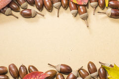 Acorn and autumn leaf border Royalty Free Stock Image