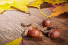 Acorn with autumn leaves at wooden table Stock Photography