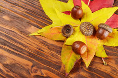 Acorn on autumn leaves at wooden table Stock Photography