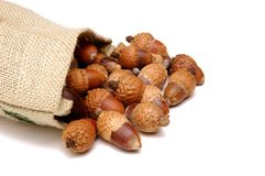 Acorn & Burlap Sack Stock Photo