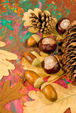 Acorn, chestnut and bumpon on a multicolored background closeup Royalty Free Stock Images