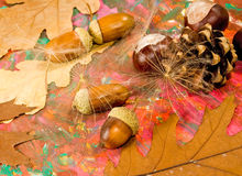 Acorn, chestnut and bumpon on a multicolored background closeup Stock Photography