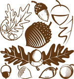 Acorn Collection. A clip art collection of various acorn icons Stock Photos