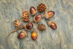 Acorn and cone fall decoration Royalty Free Stock Photos