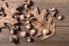Acorn cupule on wooden desk. Acorn cupule and oak leaves on wooden desk Royalty Free Stock Images