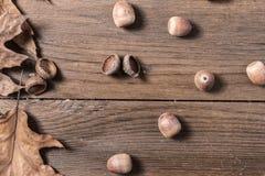 Acorn cupule on wooden desk. Acorn cupule and oak leaves on wooden desk Royalty Free Stock Photo