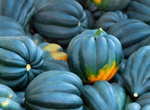 Acorn or Danish squash just picked Royalty Free Stock Images