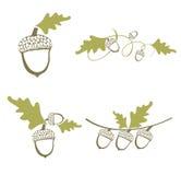 Acorn Design Set Stock Images