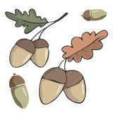 Acorn figure clip art illustration leaf drawing color element vector wood forest fruit of oak green red orange one two acorns simi. Acorn figure illustration Stock Photos
