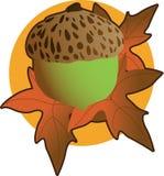 acorn grafika Zdjęcia Royalty Free