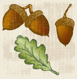 Acorn. Grunge style. Vector illustration Royalty Free Stock Images