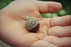 Acorn in Hand Royalty Free Stock Photos