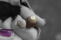 Acorn in hand Stock Photos