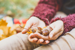 Acorn in hand. Holding acorn in a hand Stock Image
