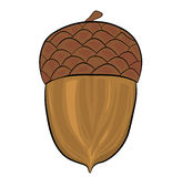Acorn illustration. Vector illustration of a acorn on white background Stock Photography