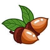 Acorn isolated illustration Stock Photo