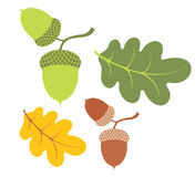 Acorn. Isolated objects on white background. Vector illustration (EPS 10 Royalty Free Stock Image