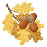 Acorn kolor żółty Zdjęcie Royalty Free