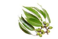 Acorn and leaf Stock Photos