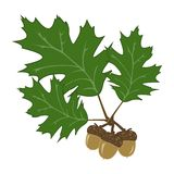 Acorn and leaf Illustration. Simple acorn with leaves illustration: Vector format available Royalty Free Stock Photo