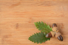 Acorn and leaves Stock Photo