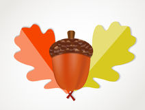 Acorn with Leaves Vector Autumn Illustration Stock Image