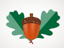 Acorn with Leaves Vector Autumn Illustration Royalty Free Stock Photography