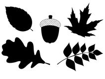 Acorn with Leaves Vector Silhouette Illustration Royalty Free Stock Photo
