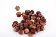 Acorn man. The man from acorn on white background, a lot of acorn Royalty Free Stock Photography