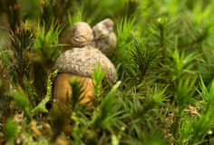 Acorn on the moss Royalty Free Stock Images