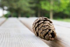 Acorn na drewnianej ławce Zdjęcia Royalty Free
