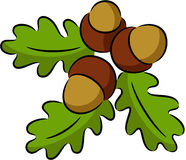 Acorn nut. Illustration of leaves and acorn nuts, isolated Stock Images