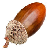 The acorn Stock Photos