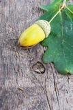 Acorn with an oak leaf Stock Photos