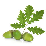 Acorn and Oak Leaf Sprig Royalty Free Stock Images