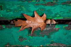 Acorn pod ławką Fotografia Stock