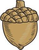 Acorn rysunek ilustracja wektor