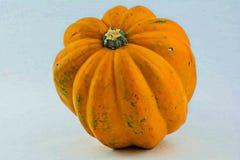 Acorn sqaush,. An acorn squash on a white back ground Royalty Free Stock Photo