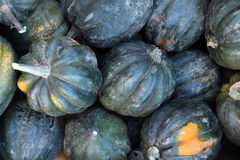 Acorn squash. Fresh green acorn squash at the market place Royalty Free Stock Photography