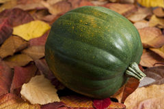 Acorn Squash on Leaves Stock Images