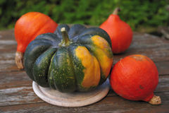 Acorn squash and orange Hokkaido pumpkins Stock Images