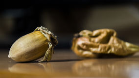 Acorn on a table Stock Images