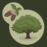 Acorn and tree Stock Photography