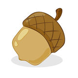 Acorn. Vector illustration of an acorn Stock Photo