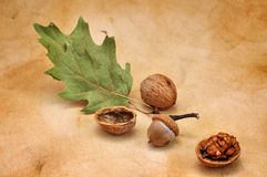 Acorn and Walnuts Royalty Free Stock Images