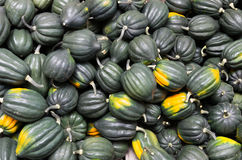 Acorn or winter squash on display Stock Photos